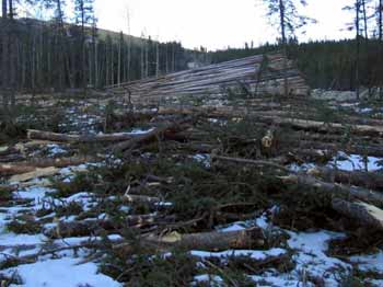 clearcut-where-fence-1-used-to-be-1